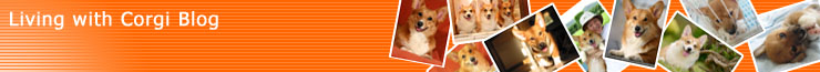 Living with Corgi Blog